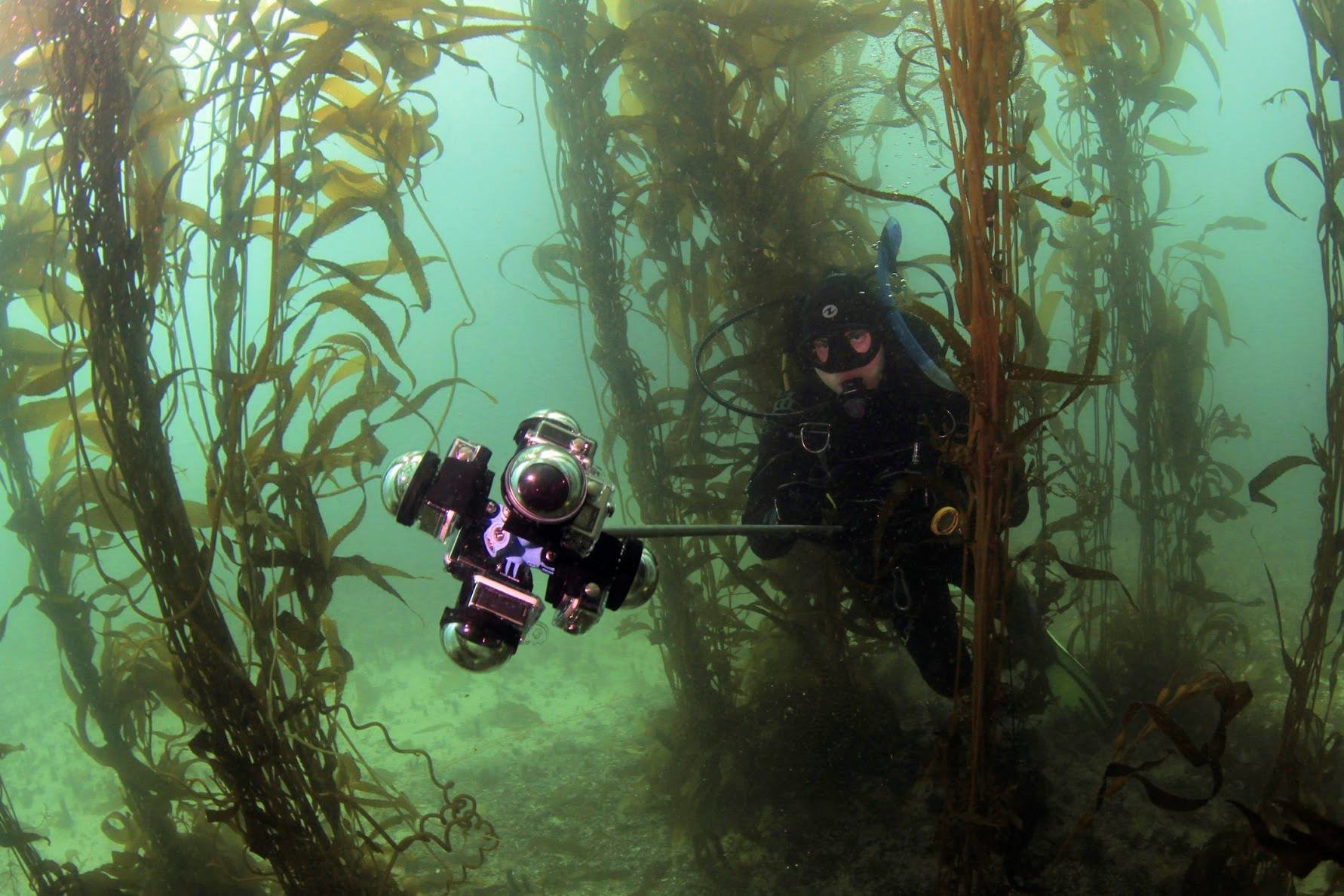 filming 360 degree VR video in the kelp forest
